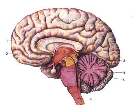 Мозг Триколор
